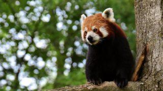 【浜松市動物園】見るだけじゃない!抱っこしたりエサをあげたり貴重な体験をしよう!