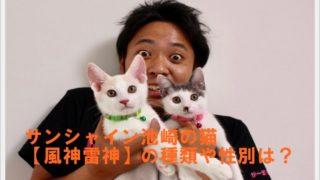 サンシャイン池崎の猫【風神雷神】の種類や性別は?出会いは猫の森?3